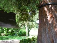 Engineered Tree Attachment